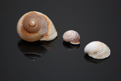 Shells Stock Photo