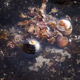 shells Images stock