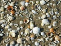 shells Photos stock