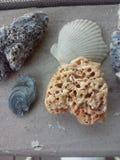 shells Stockfotos