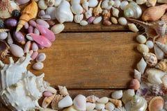 shells Stock Foto's
