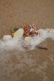Shells Stock Fotografie