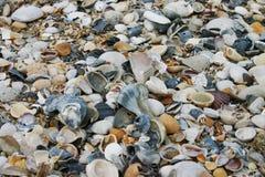 shells Image libre de droits