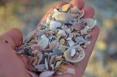 shells Lizenzfreie Stockbilder
