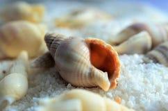 shells Royalty-vrije Stock Fotografie
