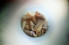 shells Stock Foto