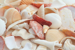 Shells. Pattern stock images