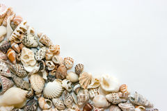 Shells. Different shells lying on the white background Stock Image