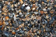 shells image stock