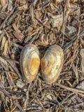 shells royalty-vrije stock afbeeldingen