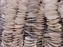Shells royalty-vrije stock foto's