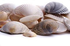Shells royalty-vrije stock foto