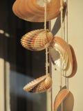 shells Stockfoto
