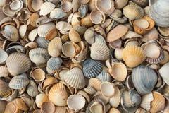 shells Photos libres de droits