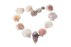 Shells. Heart made of shells isolated Royalty Free Stock Images