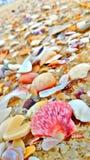 shells Images libres de droits