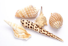 Shells. Against white background Stock Images