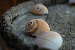 shells Photographie stock