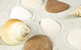 Shells. Nice different shells lying on white sand Royalty Free Stock Photo