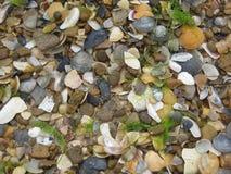 shells Photo libre de droits
