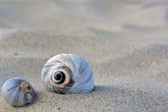 Shells aan de kant Stock Afbeeldingen