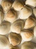 Shells achtergrond Stock Foto's