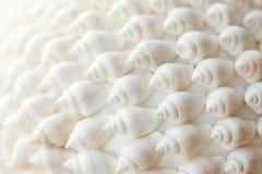 Shells achtergrond Stock Fotografie