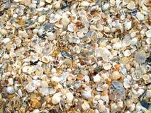 Shells achtergrond Stock Afbeeldingen