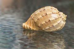 shells Achtergrondglas Stock Foto's