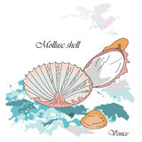 Shells of adriatic. Adriatic shells used in kitchen of Venice on the blue background. Vector illustration Stock Image