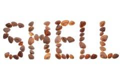 Shells against white background Royalty Free Stock Image