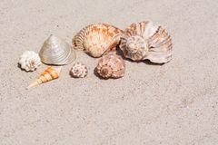 Shells from all the seas of the world on a beautiful wavy sand. Shells from all the seas of the world on a beautiful wavy sand Royalty Free Stock Photos