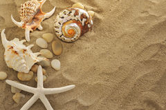 Shells And Stones On Sand Stock Photography