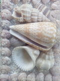 Shells animal sea sand beach summer Royalty Free Stock Photo
