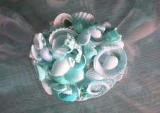 Shells aqua stock image