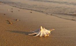 Shells auf dem Sand durch das Meer am Sonnenuntergang Stockbild