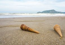 Shells auf dem Strand lizenzfreie stockfotografie