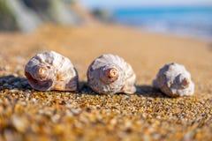 Shells auf dem Strand lizenzfreies stockbild