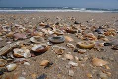 Shells auf dem Strand Stockfotos