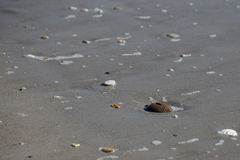 Shells auf dem Strand Lizenzfreies Stockfoto