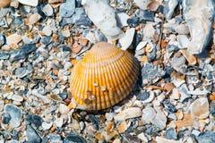 Shells auf dem Strand Stockbilder