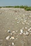 Shells auf dem Strand Stockbild