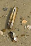 Shells auf der Ufer-Zeile Lizenzfreie Stockfotos