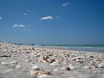 Shells auf einem Florida-Strand Stockfotos