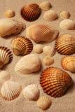 Shells auf einem Strand stockbilder