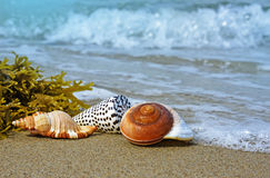 Shells auf einem Strand Lizenzfreie Stockfotografie