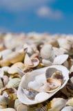 Shells auf einem Strand Lizenzfreies Stockbild