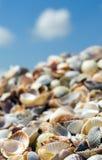Shells auf einem Strand Stockfotos