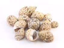 Shells auf einem weißen Hintergrund Stockfotos