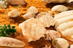 Shells auf goldenem Sand 01 Stockfoto